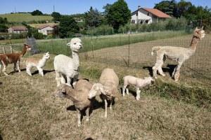 Anche i bambini con disturbi dello spettro autistico e deficit di attenzione al centro estivo nella fattoria con asini e alpaca