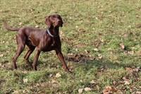 Al parco Francolini una nuova area di sgambamento per cani