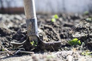 L'agricoltura tra i possibili motori della ripresa, al via un confronto per far incontrare domanda e offerta