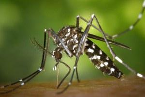 Lotta alla zanzara tigre, al via la campagna di distribuzione dei prodotti larvicidi e i trattamenti alle caditoie