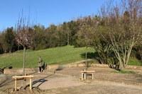 Parco dei Cappuccini, omaggio a Tonino Guerra: piantati due ciliegi nello spazio di sosta a ridosso dell'ex cava