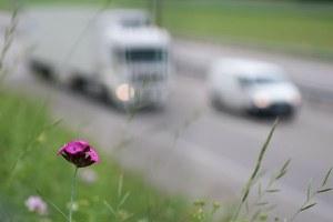 Sicurezza stradale, ridotti i limiti di velocità in sei vie comunali